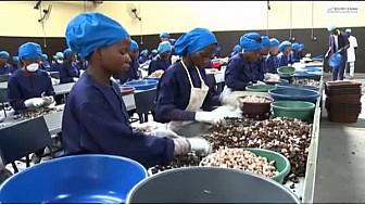 Film documentaire : Potentiels et Opportunités de la région du Gbèkê